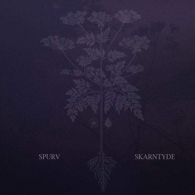 Spurv - Skarntyde